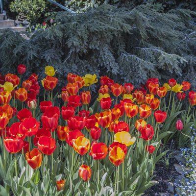 Ananda Tulip Gardens