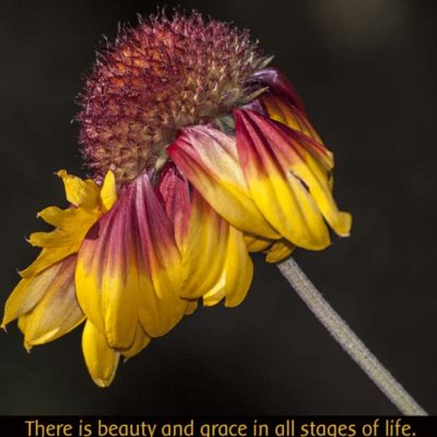 Macro Flower ~ End of Life Beauty